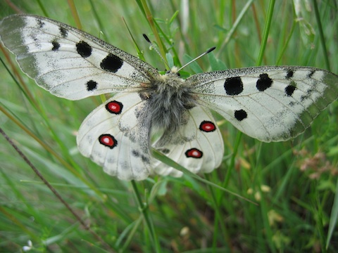 Butterfly Holidays in the Western Rhodope Mountains