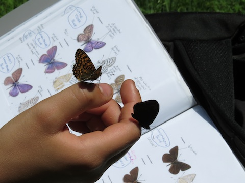 Butterfly Holidays in Bulgaria