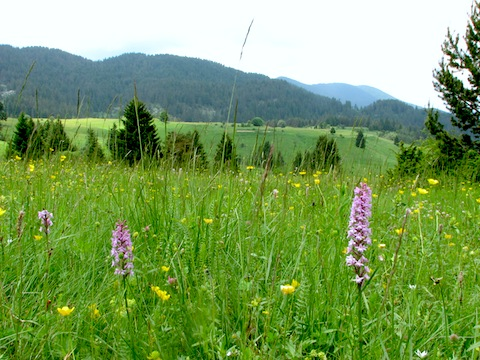 Orchid Holidays in Western Rodopi Mountains