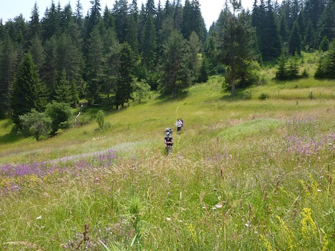 Walking in the Rhodope Mountains
