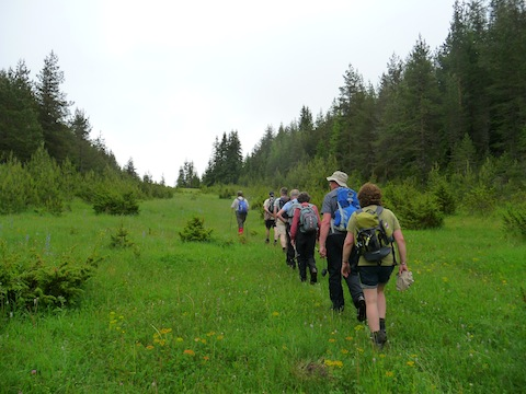Walking in Rodopi Mountains Forest Meadows